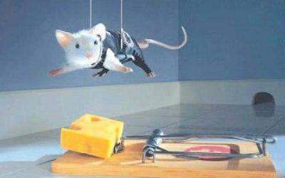 Truyện ngụ ngôn: Cái bẫy chuột