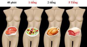 Tiêu hóa thực phẩm